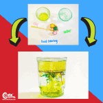 Dr. Seuss STEM Preschool Science Experiments Montessori Worksheets (4-6 Year Olds)