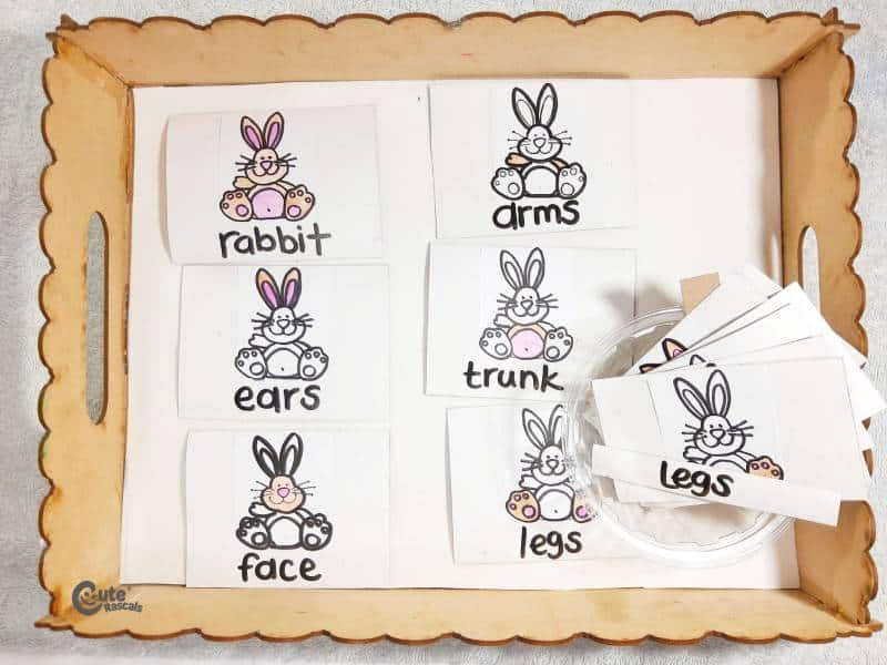 Materials Rabbit Body Parts easy science activities for kids