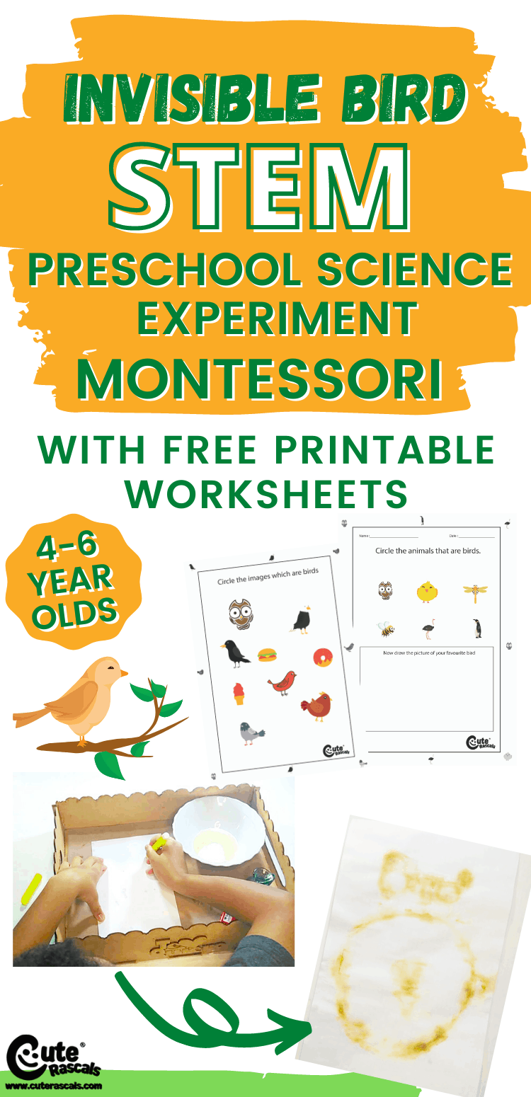 Fun cool science experiments. Teach kids how to do the invisible bird STEM activity.